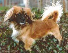 Zum Gedenken An Den Kleinen Hund Joschi 84 Sprüche Zu Den Themen