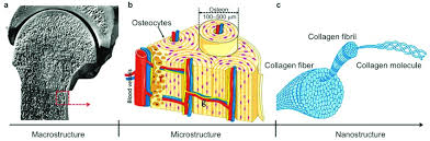 bone tissue bone tissue diagram manual e books