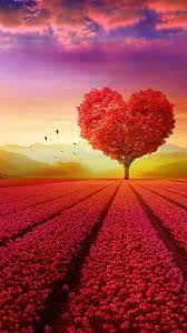 Love Heart Shape Tree Flowers Hd Mobile ...