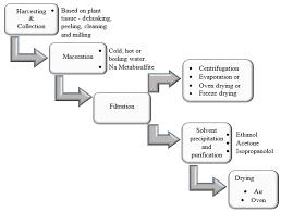 Paracetamol Manufacturing Process Flow Chart 46 Thorough Plant Tissues Flowchart