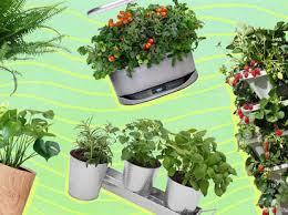 indoor plants how to grow herbs