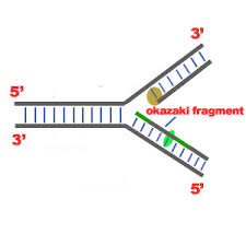 Dna Replication Definition Steps Of Dna Replication