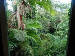 Rainforest Bedroom Rainforest A Wandering In Heels