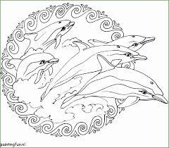 4 Dolfijnen Kleurplaat Kayra Examples
