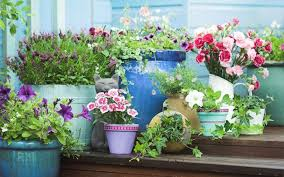 luscious low maintenance container garden