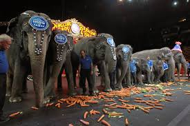why animal groups pushed for circus elephant retirement newshour