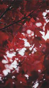 Deep Red Leaves iPhone 8 Wallpapers ...