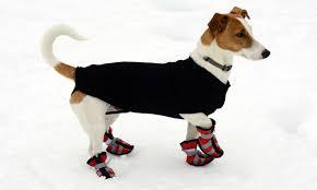 Qumy Dog Boots Size Chart 10 Best Dog Boots 2019 Shoeadviser