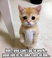 cute animals quotes. Simple Cute Top 40 Funny Animal Picture Quotes Funny Intended Cute Animals Quotes Pinterest