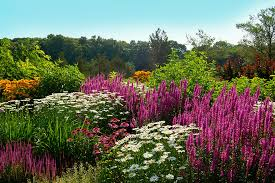 a garden of purple and white flowers with a blue sky create a sunny colorful border