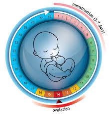 Ovulation Chart Boy Girl Ovulation Calculator Your Next 3 Month Fertile Calendar Online