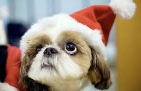 cute christmas puppies. Exellent Cute Puppies Make Bad Presents This Adorable Bundle Of Christmas  On Cute Puppies S