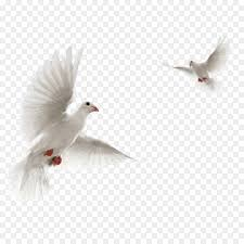 dove flying clipart. Fine Dove Columbidae Rock Dove Flight Clip Art Bird  For Dove Flying Clipart 3