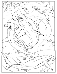Small Picture Coloring Pages Hammerhead Shark Color Page Eye Picture Free To