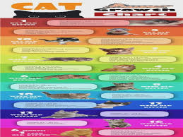 Kitten Size Chart Infographic Kitten Cat Growth Chart By Age Weight And Food