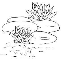 Small Picture remarkable Glamorous Lily Pad Coloring Page Online Free Printable
