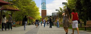 suny binghamton university the common application suny binghamton university
