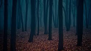 dark forest wallpaper 1920x1080. Brilliant 1920x1080 Dark Forest Wallpaper  BDFjade To 1920x1080 L