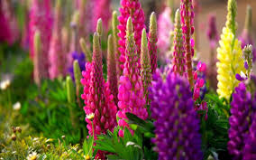 beautiful flower background wallpapers 07632
