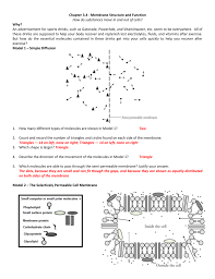 Animal Cells Worksheet Answers Worksheets For All Download And