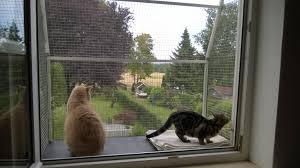 Katzenbalkon Balkon Für Katzen Gestalten Infos Tipps