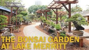 bonsai gardens the bonsai garden at