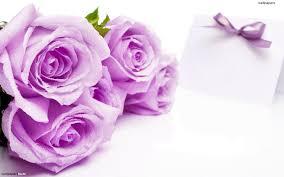 Purple Flowers Backgrounds Purple Flower White Backgrounds Wallpaper Cave