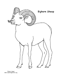 Small Picture Bighorn Sheep Coloring Page