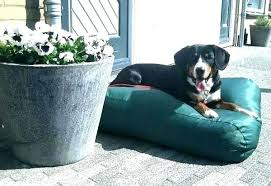 diy outdoor dog bed – julianletizia.info