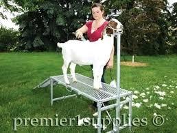 Goat Lice Goat Lice Treatment Fbfilms Co