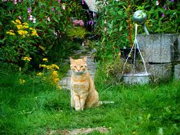 how to keep cats out of the garden. Keeping Cats Out Of Your Garden How To Keep The
