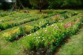 cut flower patch higgledy garden