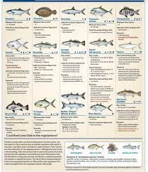 2019 Destin Florida Fishing Regulations Destin Inshore Guides