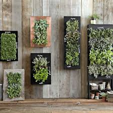 wall mounted planters are ideal for