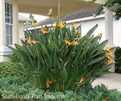 Small Picture Best 25 Florida landscaping ideas on Pinterest White