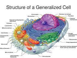 3. เซลล์ของสิ่งมีชีวิต | Biology Learning by Kru Wichai Likitponrak