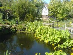 Pond Design How To Add An Oriental Touch To Your Northampton Pond Design Any
