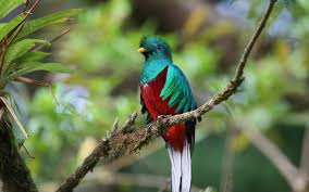 Small Picture Quetzal Wallpaper Animals Town