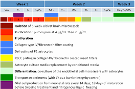 Insert Coating Chart Flow Chart Summarizing The Main Steps Of The In Vitro Bbb