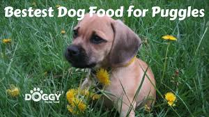 Puggle Growth Chart Best Dog Food For Puggles 2019 Reviews Comparisons Likes