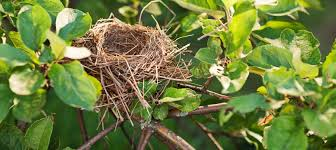 how to keep birds away from garden. How To Keep Birds Away From Garden