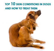 Top 10 Skin Conditions in Dogs and How to Treat them - Allivet Pet ...