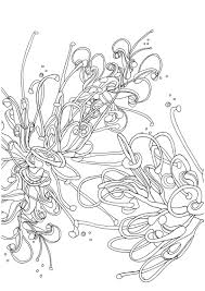 Grevillea Colouring Page 800px
