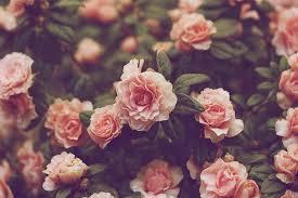 Aesthetic Flower Wallpaper Laptop Hd