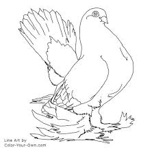 Small Picture Bird Pigeon Coloring Page Fancy