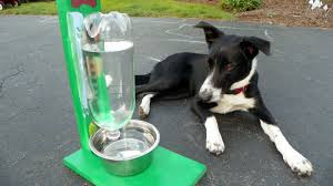 you can t always stick around to keep your pet s water bowl full but you can build a clever contraption that ll do the job for you