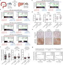 Ho Animal Bindings Size Chart Tissue Specific Transcription Reprogramming Promotes Liver