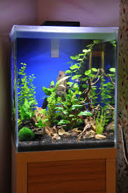 Labyrinth Fish Tank 41 Best Gourami Greatness Images On Pinterest Tropical Fish