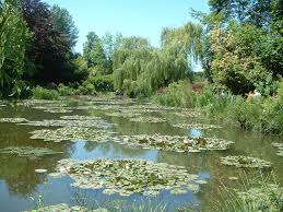 the first impressionist writework nympheas in the claude monet s garden in giverny