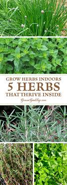 how to grow a herb garden. Even If You Don\u0027t Have Outdoor Gardening Space, There Are Plenty Of Herbs How To Grow A Herb Garden